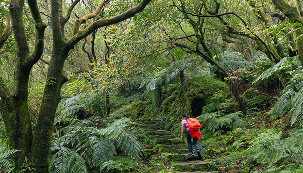 woman trekking in the subtropical forest of the Yangmingshan National Park, Taipei, Taiwan. Photo Credit: Shutterstock