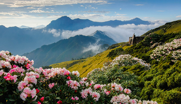 Rhododendron, Yushan Rhododendron (Alpine Rose) Blooming by the Trails of Taroko National Park, Taiwan. Photo Credit: Shutterstock
