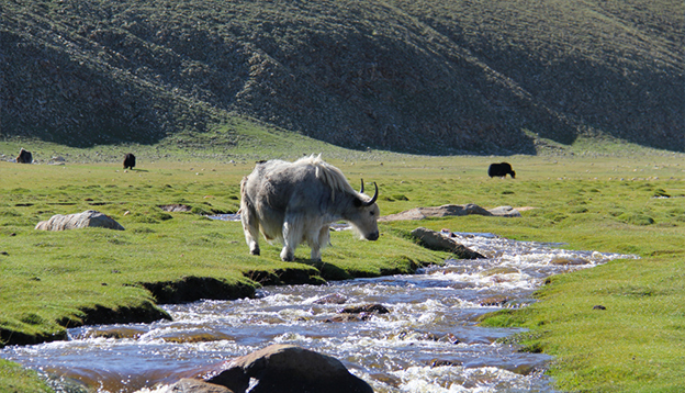 Mongolian Steppe: one of the most picturesque regions on earth. Photo Credit: Shutterstock