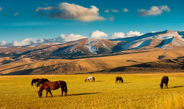 Horses on a pasture, Kazakhstan.